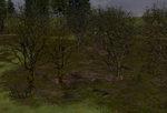 Tree-bases_woods_winter_no_snow-ls