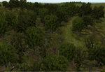 Trees_deciduous_summer-ls