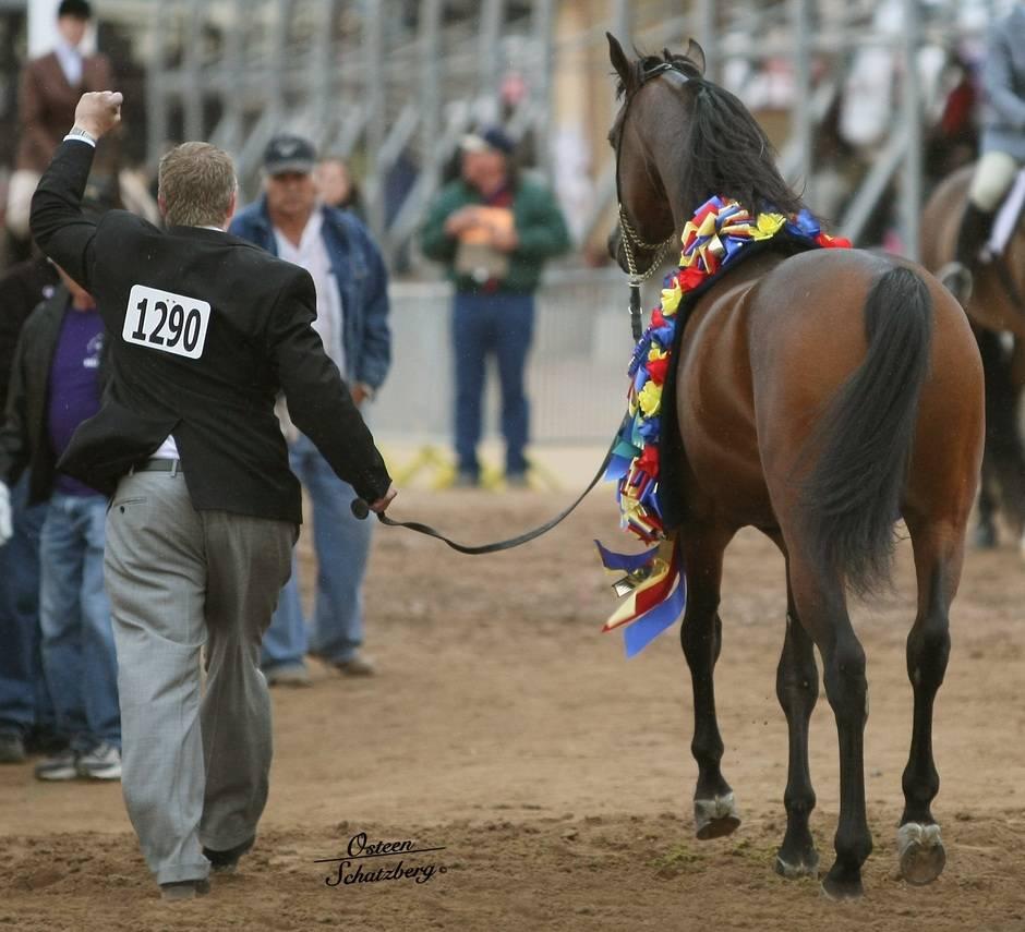 Arabian Horse Association of America :: Arabian Horse ...