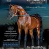 Scottsdale Arabian Horse Show News for Wednesday, February 17, 2016