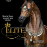 Scottsdale Arabian Horse Show News for Thursday, February 18, 2016