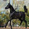 Scottsdale Arabian Horse Show News for Friday, February 19, 2016