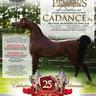 Scottsdale Arabian Horse Show News for Saturday, February 20, 2016