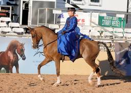Scottsdale Arabian Horse Show News for Wednesday, February 17, 2016
