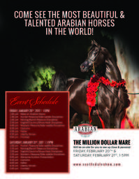 The Million Dollar Mare