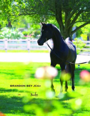 Brandon Bey JCA +