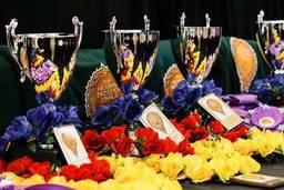 2011 AB Finals