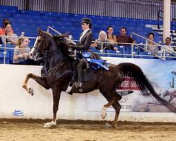 Scottsdale Arabian Horse Show News for Friday, February 13, 2015