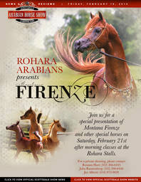 Scottsdale Arabian Horse Show News for Friday, February 20, 2015
