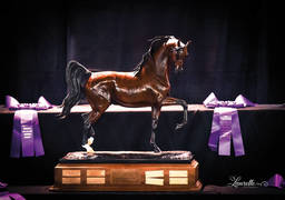 THE 2015 ARABIAN NATIONAL BREEDER FINALS