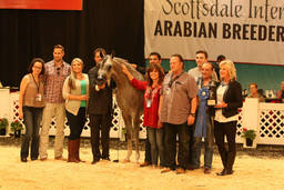 Scottsdale Arabian Horse Show News for Sunday, February 14, 2016