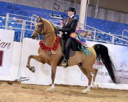Scottsdale Arabian Horse Show News for Tuesday, February 16, 2016