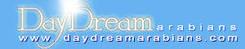 http://www.daydreamarabians.com/