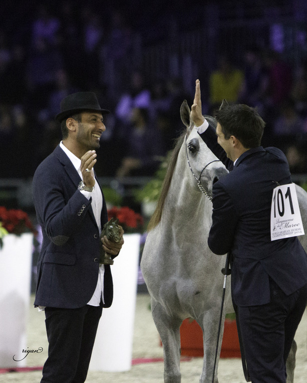 2014 salon du cheval de paris world arabian horse championship arabian horses stallions - Salon du cheval 2014 paris ...