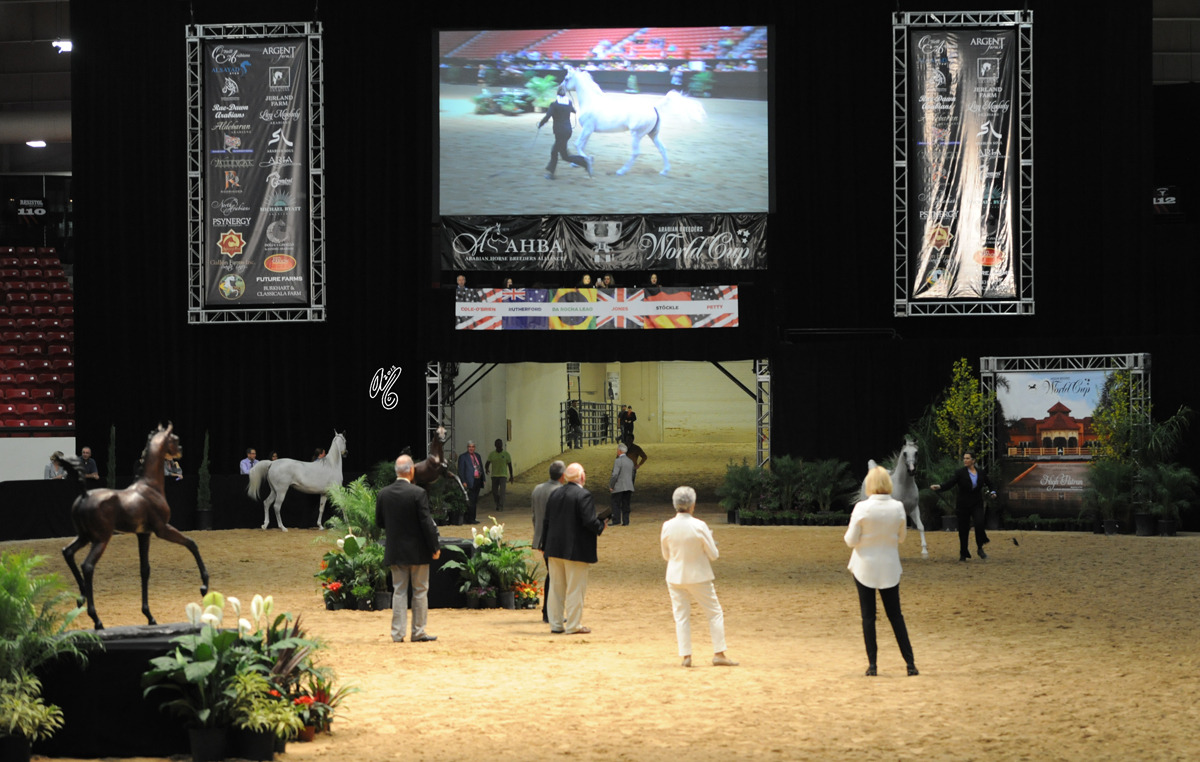 Let the 2015 Arabian Breeders World Cup Classes in Las Vegas BEGIN! Friday: Fillies and Mares