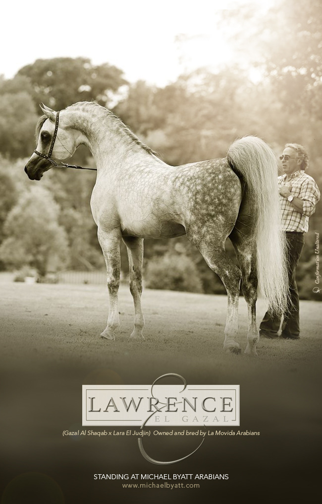 Lawrence And The Arabians Ooh Baby Coincidence