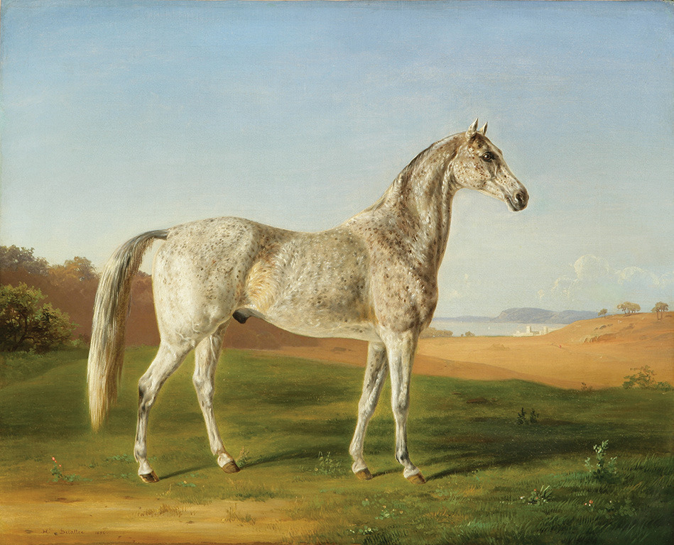 HORACE TERRY'S SPOTTED ARABIAN by Henri DeLattre, 