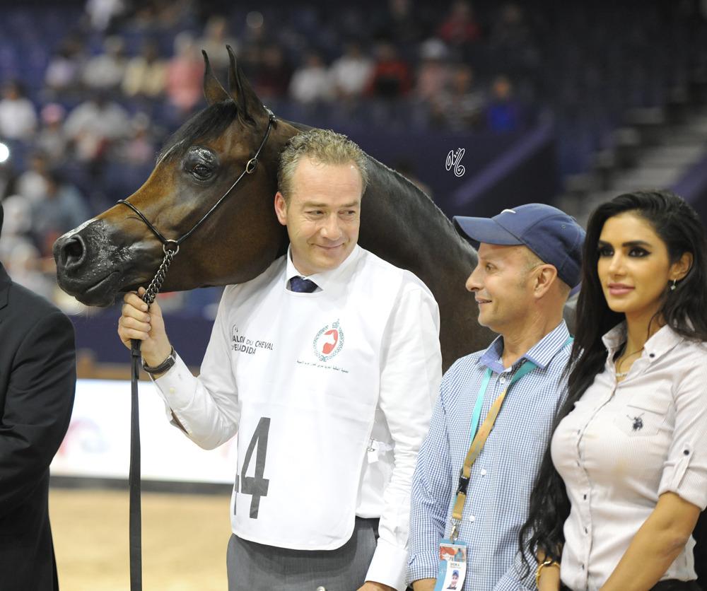 Senior Mare Gold Champion Ghazalat Al Khalediah (PA Gaszi X Argentinna SS)