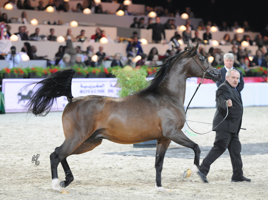 Senior Male Silver Champion Equator (QR Marc X Ekliptyka)