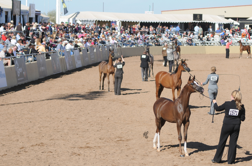 2012: Scottsdale Signature Stallion Filly Championship