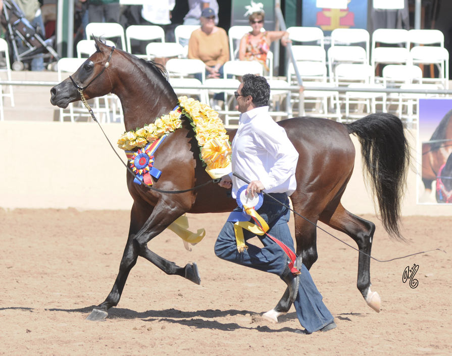 2012: Supreme Champion Aria Impresario and Jeff Sloan