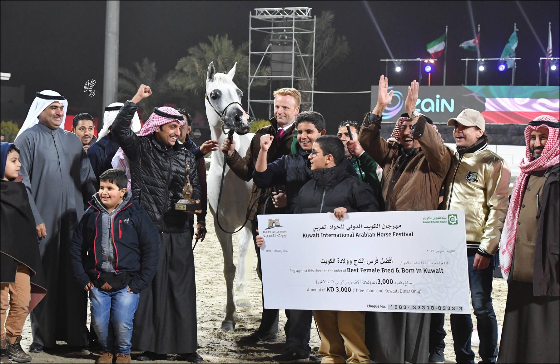 Best SE Arabian Female bred and born in Kuwait: Shalwa (Sinan Al Rayyan X Al Galyla), who was bred by Essam Al Roumi and is owned by Aldanat Stud