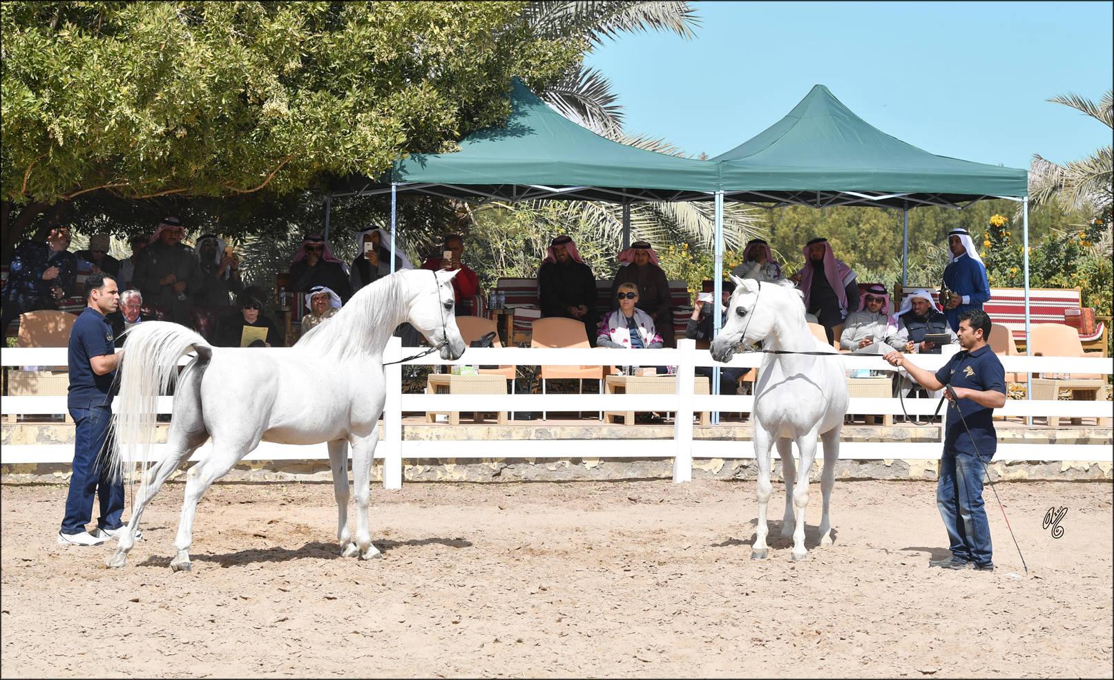 Al Raya & Al Sharq Stud