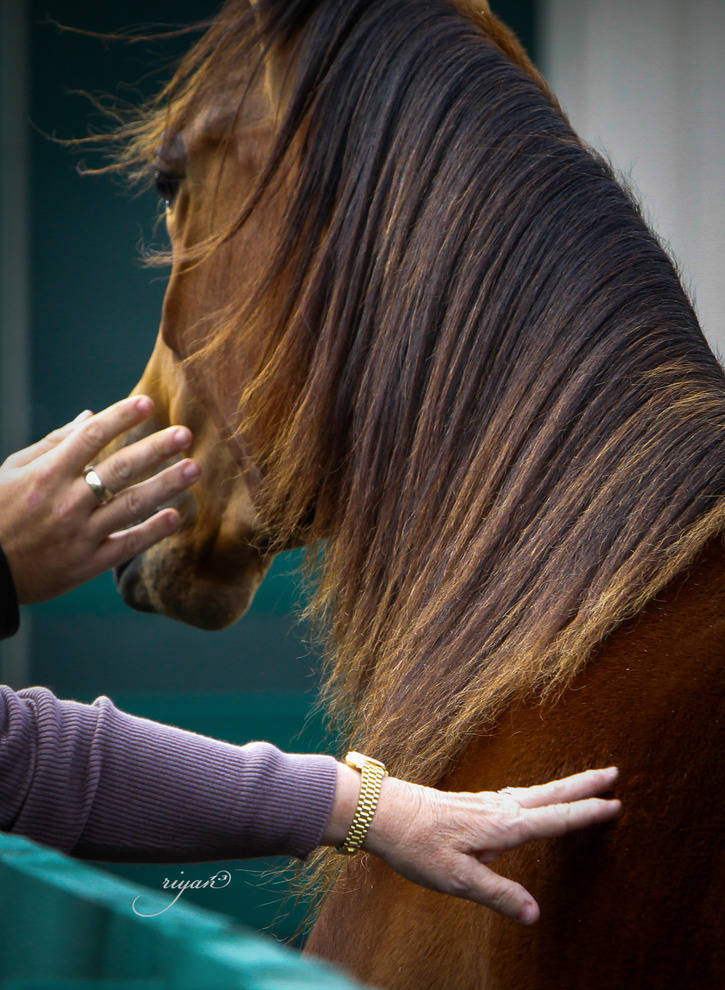 Hennessey Sponsors Arabian Horse Seminar