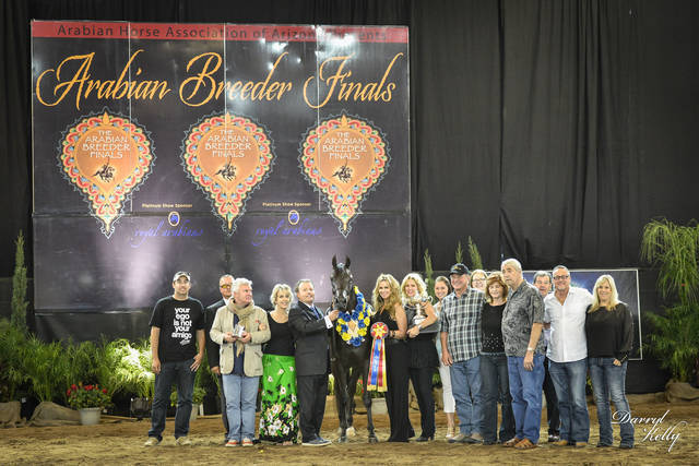 Celebrating with the McMahon's and their filly Valerina GF at the 2013 Arabian Breeder Finals