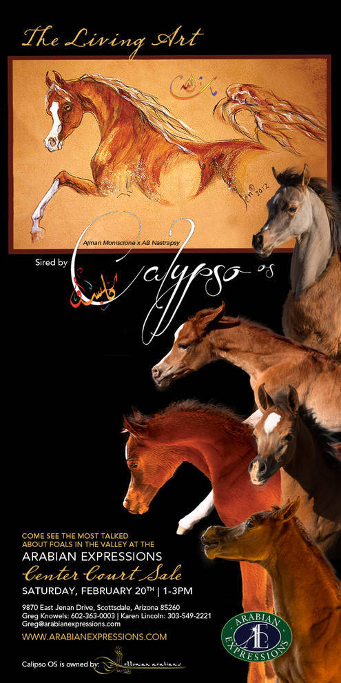 Calypsos has sired some of the best foals in the Valley!!