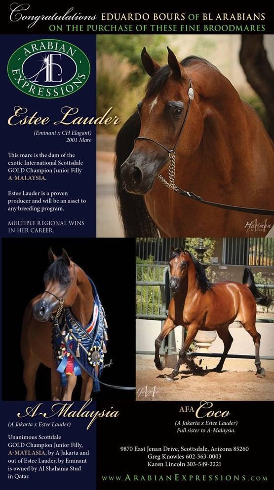 Congratulations to Eduardo Bours for the purchase of these fine mares!