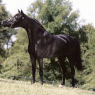 Sequoia Majestic Mime (2002-2011)