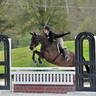 HITS Ocala Hunter Prix Roundup