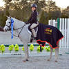 Ponies prove big things come in small packages in Ocala Week VI's $1,000 Zone 4 Pony Handy Hunter Classic