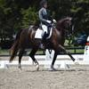 Virginia Summer Dressage Raves about HITS Commonwealth Park