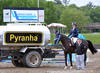 Pyranha returns as the Official Fly Spray of HITS Horse Shows