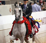 CP Rock On (Hucklebey Berry x First Danse) Multi-National Champion