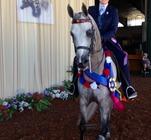 CP Steely Dan (Baske Afire x Misty Danser) 2014 Region 5 Unanimous Champion Arabian Country English Pleasure JOTR