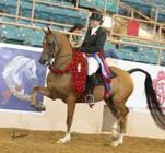 CP Rumor Has It (CP Sequoia x CP Jasmine) 2014 Youth National Champion Arabian English Show Hack JOTR 18 & Under