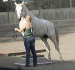 Horsemanship Club