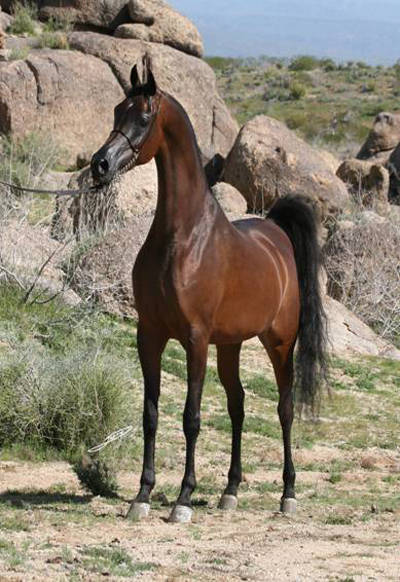 Stallion Photo Gallery Photo Gallery