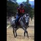 La Paloma Dream (Dreamcatcher SMF x Spanish Fad) Multi-Champion NATRC horse.