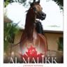 2019 CANADIAN NATIONAL CHAMPION Jackpot Arabian Two-Year-Old Colt AL MALIIK & Rodolfo Guzzo!