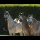 L to R Princess Samaria, Seraphina and Sahbrina
