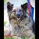 Sharon Rose's dog, Sheyna