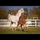 Foal # 4 2014 Chestnut colt by Symbolic SMF named Shahin El Nil SMF