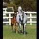 a very bold foal!