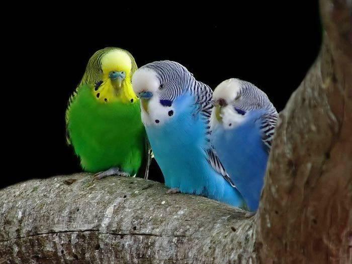 Tweet, Twitter and Google