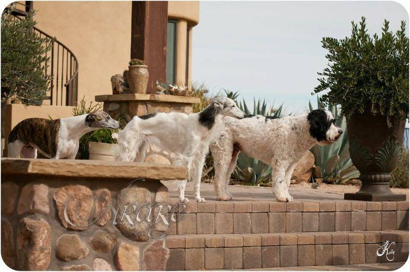 The guard dogs of SWF