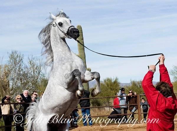 Fun Horse Pics